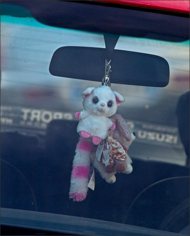 auto peluches blanches
