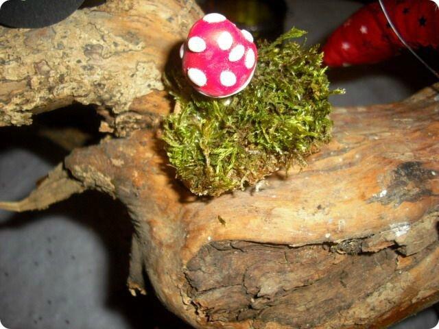 champignonite aigue 1