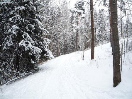 foret_sous_la_neige