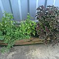 Les plantes que j'aime chaque matin les sentir sont tout prés de mon bureau