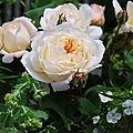 Des roses et des choux