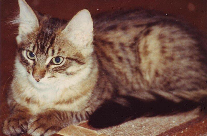 charly le premier chat de ma mère