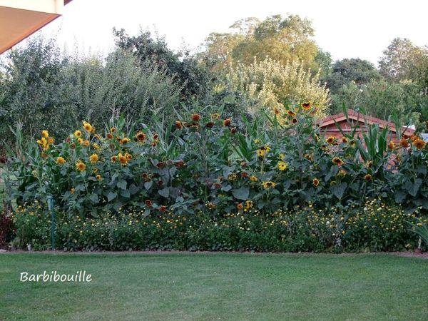 jardin11 Aout13 013