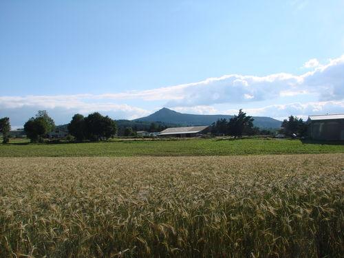 2008 07 14 Le blé en avant plant et le Lizieux à l'arrière