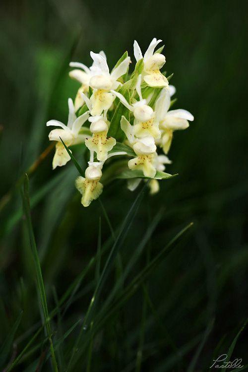 OrchidJaune_12 27 05_9014