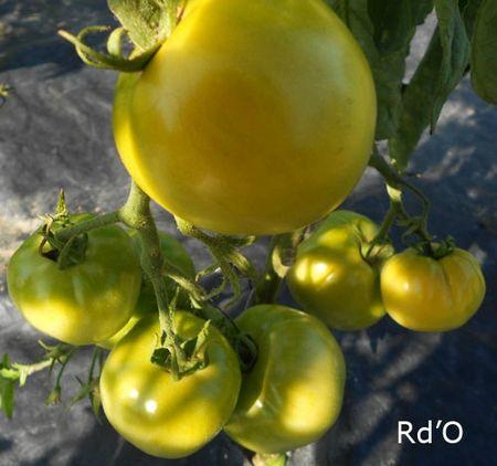 tomates-blog-07