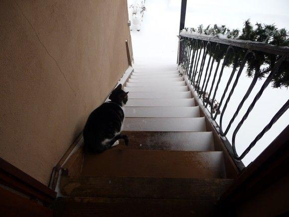 neige_janvier_2010_2