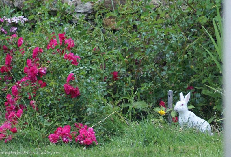 lapin blanc debout