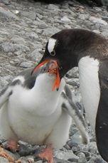 Antarctica 2011 249