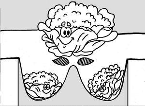 24_MASQUES_masques légumes_série1- (chou)