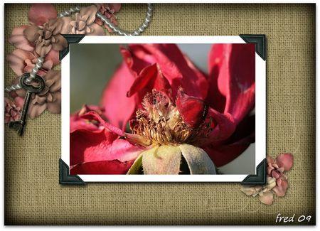Picnik_collage_1_sign_e