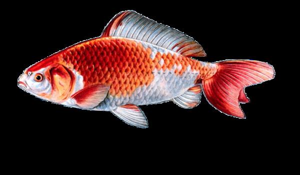 tube poissons 17