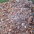 Les feuilles hachées sur mon compost;