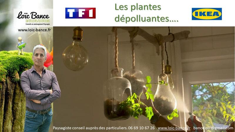 Paysagiste-plantes-depolluantes-conseils-aupres-des-particuliers-Loic-BANCE