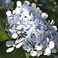 Avranches_aug10_fleurs