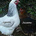 Lynette et suzanne1