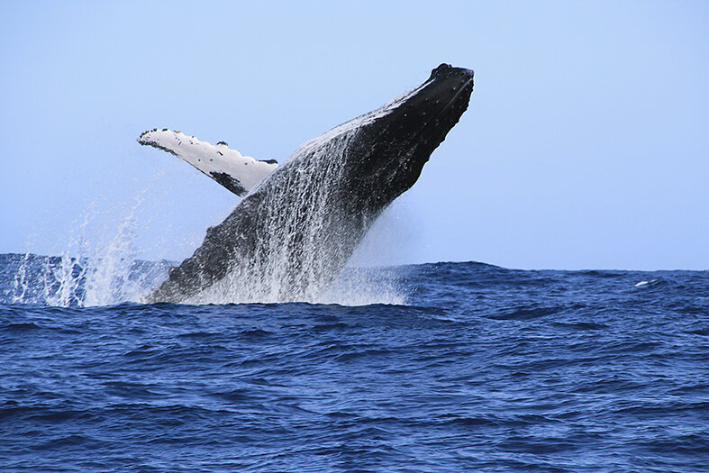 blog_usa_baleine_hawaii