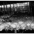 genocide (par Bruce Clarke)