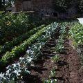 2009 07 17 Les légumes au jardin