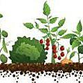 «παράταση λειτουργίας του τοπικού θεματικού δικτύου περιβαλλοντικής εκπαίδευσης : σχολικοί λαχανόκηποι: καλλιεργώ μέρος της τρ