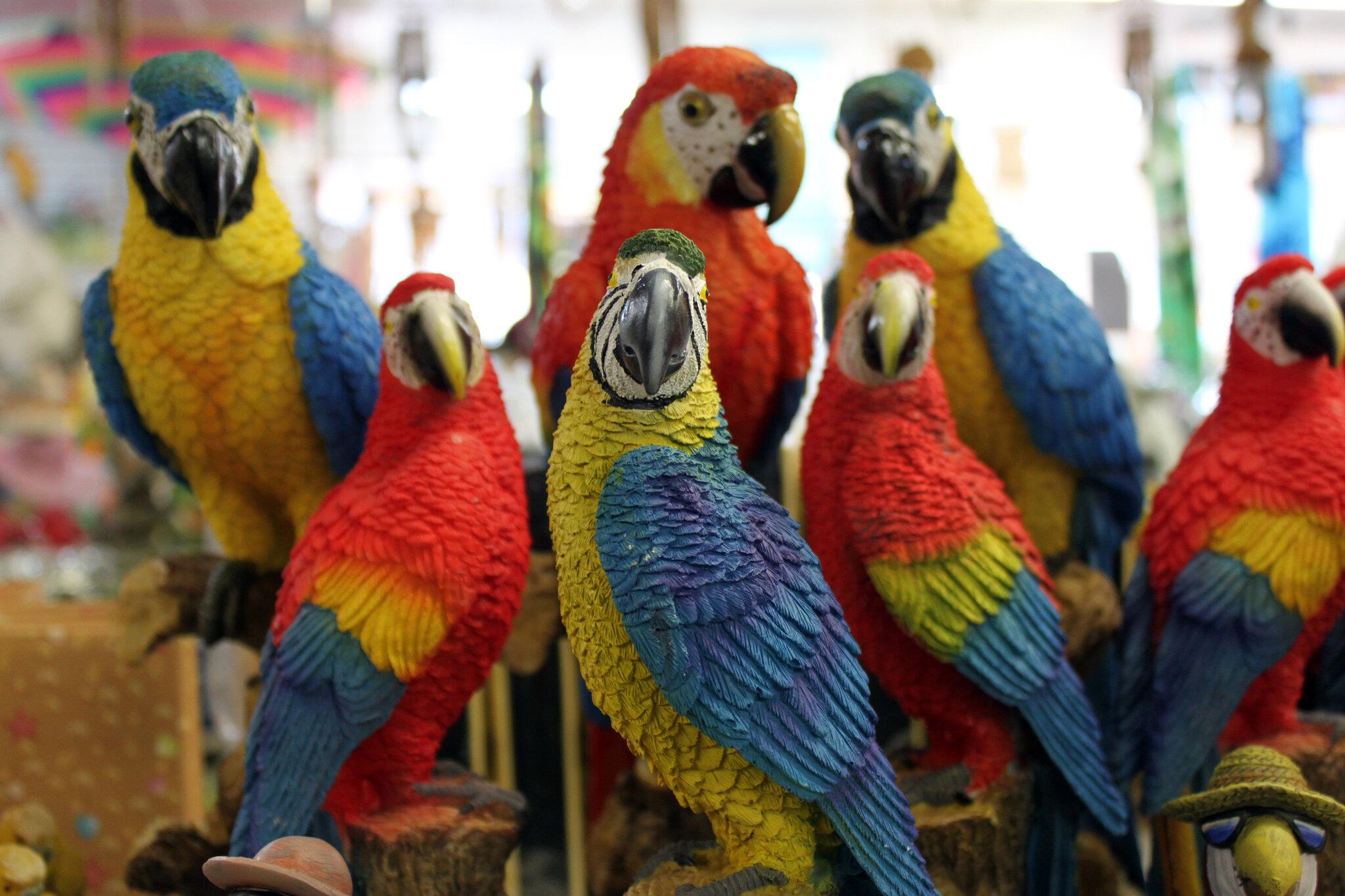 Perroquets_