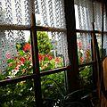 mimosa en cascade