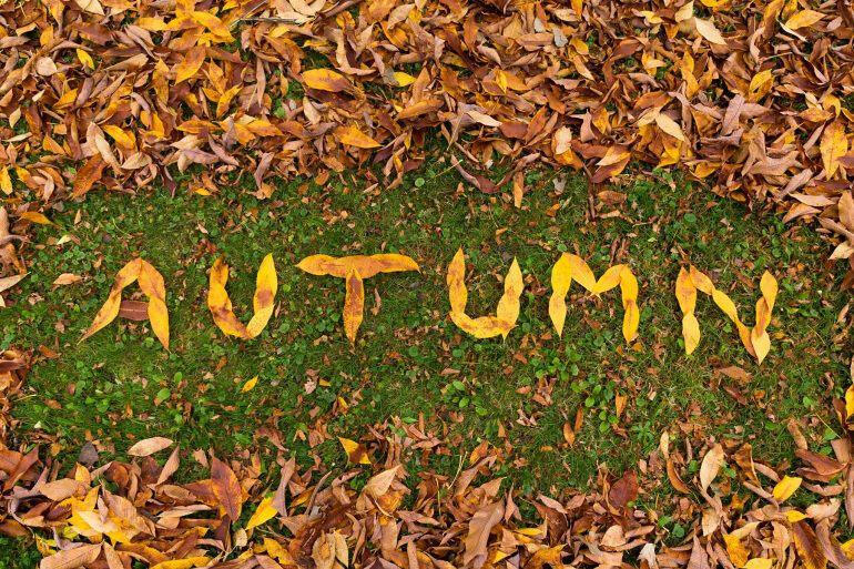 jardin_automne