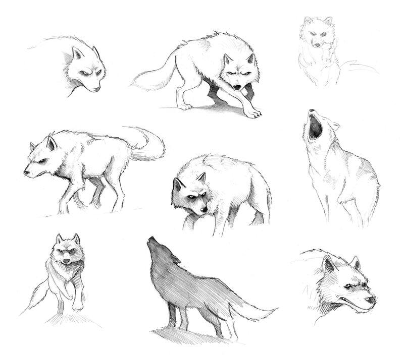 recherches loups remi bostal cinglais contes & legendes normandes 6 (1) 72