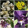 Fleurs mai 2013 (2)