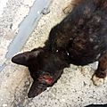 Chat maigre et blessé sur Deshaies2