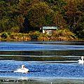 Lac Cygnes 2610153