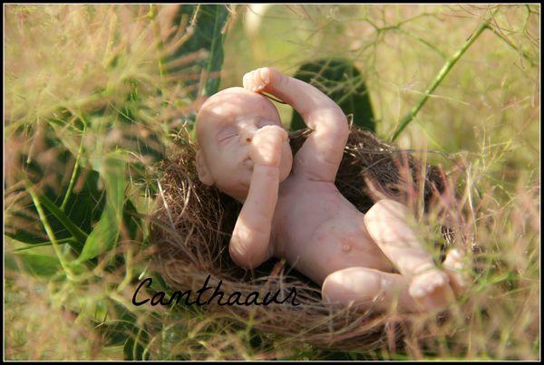 bébé oiseau