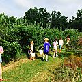 Blueberry picking 2017!! frog pond farm and architectural trees farm...