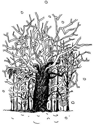 arbre_qui_cache_la_foret