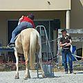 Jeux équestres manchots 2013 (230)