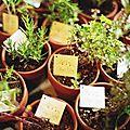 herbes de cuisine