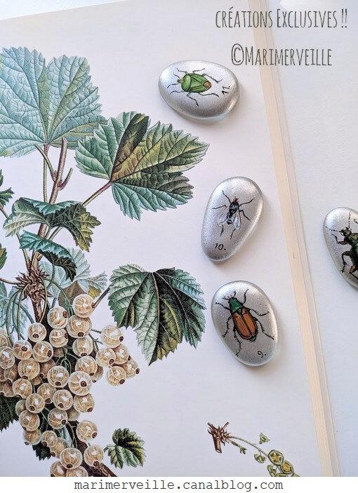 cabinet de curiosités- galets d'entomologie ©création Marimerveille