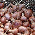échalottes www.passionpotager.canalblog.com
