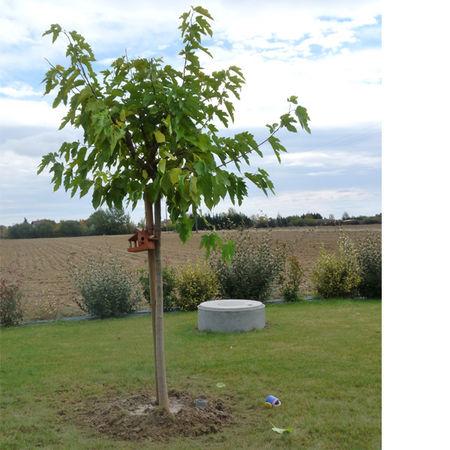 arbres_2