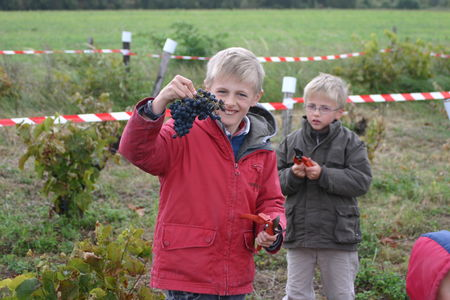 les_vendanges___la_chapelle_5_octobre_2008_019