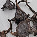Pseudocraterellus cinereus