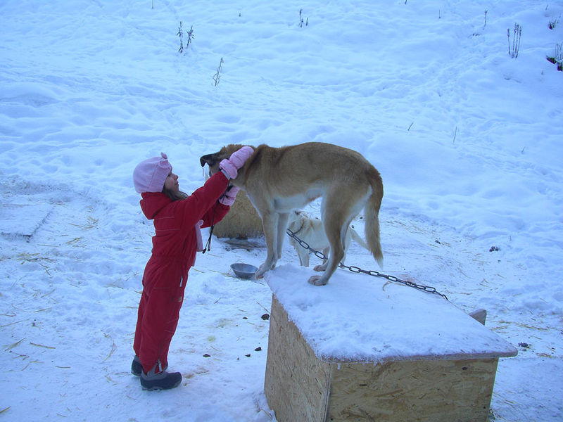 LES PETITS MUSHERS A L'OEUVRE : RESPECT !!!