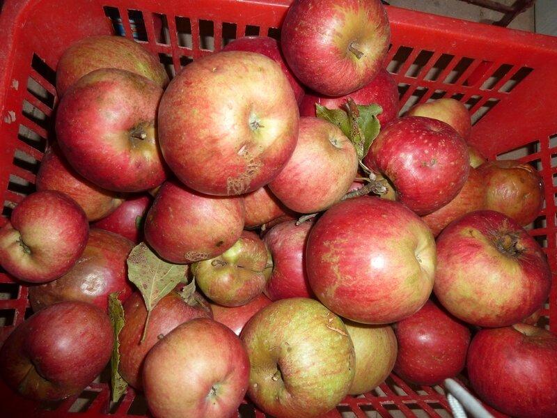 pommes de l'étang (2)