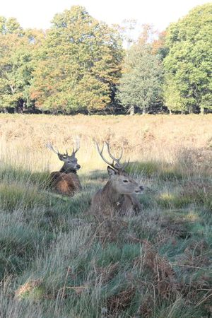 richmond park (20)