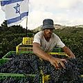Les vignobles d'israël veulent participer à l'essor mondial du vin colonial