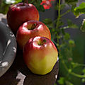 Pommes, pom, pom....