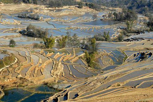 Les terrasses de Yuanyang