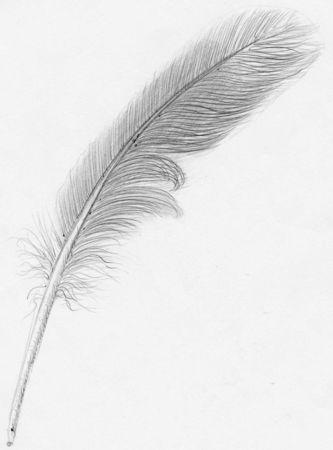 Plume_d_oiseau