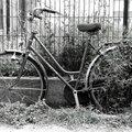vélo végétation_8002