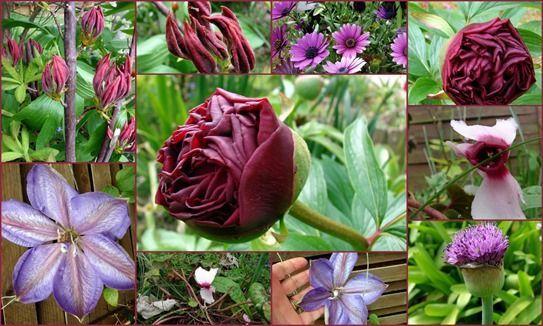 Fleurs de mai (Copier)